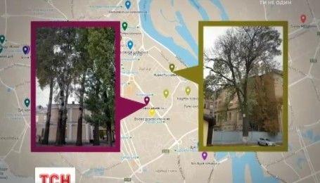 """У столиці активісти укладають карту """"видатних"""" дерев"""