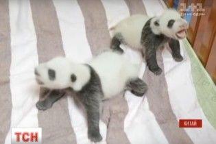 У Китаї вдалося виходити двох новонароджених 100-грамових панденят