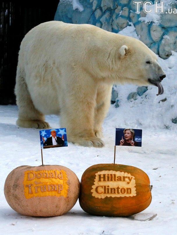 У Сибіру білому ведмедю й тигру згодували гарбузових Трампа й Клінтон