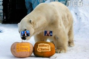 В Сибири белому медведю и тигру скормили тыквенных Трампа и Клинтон