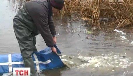В Днепре выпустили пять тонн мальков, чтобы спасти реку