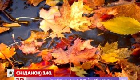 Як обігріти будинок за допомогою опалого листя