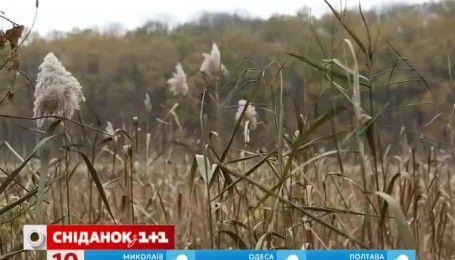 Мій путівник. Кіровоградщина - містичний Чорний ліс та Кременчуцьке водосховище
