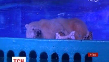 Піцца переїжджає: популярному ведмедю надали нове помешкання