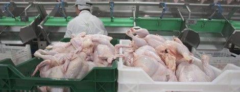 Украинские производители накачивают животных антибиотиками, которые разрушают организм человека