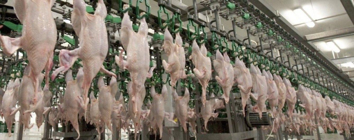 Евросоюз и еще 8 стран запретили ввоз птицы и яиц из Украины