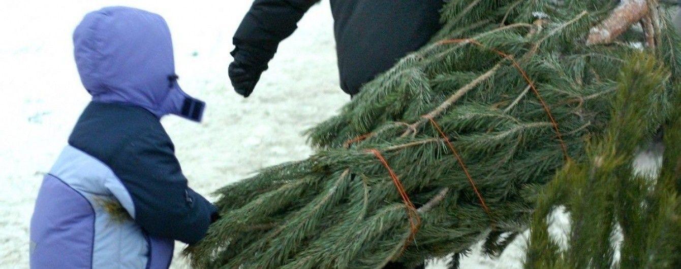 Перевірити законність вирубки новорічної ялинки можна онлайн