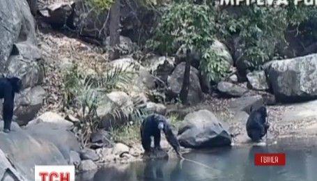 У мережі з'явилося дивовижне відео про шимпанзе-рибаків