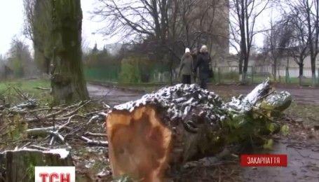 В Ужгороде тополь упал на 11-летнюю школьницу