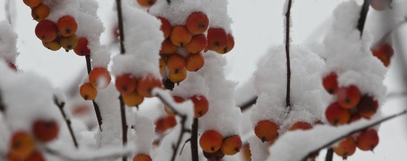 Какой будет погода в первый день зимы. Прогноз на 1 декабря