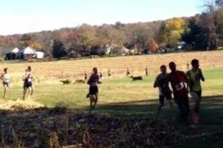 У США під час марафону легкоатлета збив олень