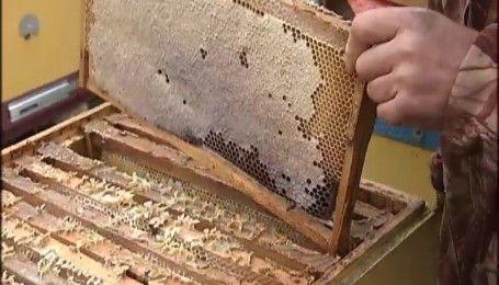 Сладкий бизнес: как отличить настоящий мед от отравы - Секретные материалы