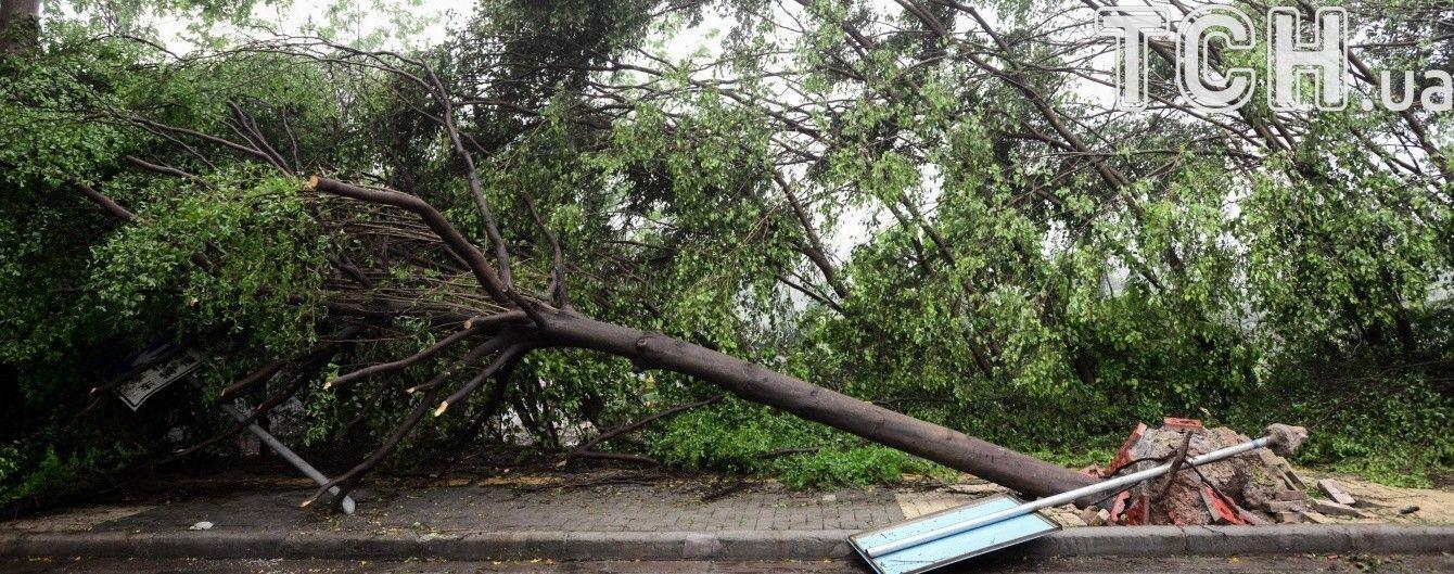 У Бельгії потужний ураганний вітер повикручував дерева з землі