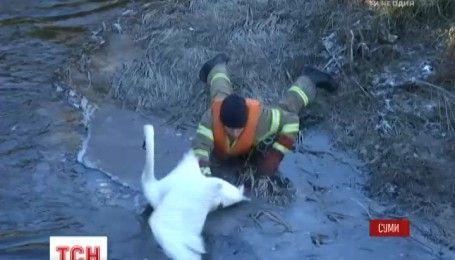 В Сумах успешно провели операцию по спасению лебедя