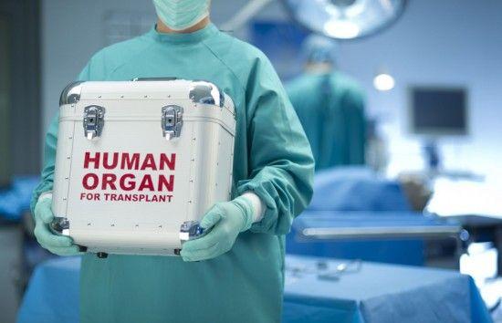 Рада візьметься за трансплантацію органів