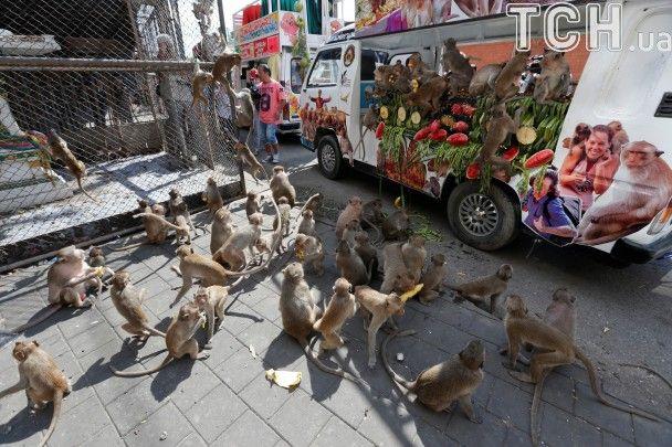 """""""Шведський стіл"""" для мавп. У Таїланді їжею дякують тваринкам за приваблення туристів"""