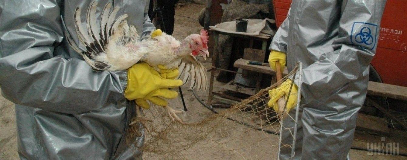 В Украине впервые за последние 8 лет зафиксировали птичий грипп