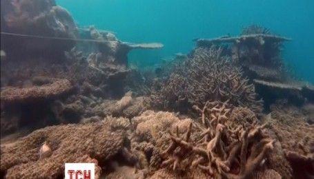Австралія витратить майже понад мільярд доларів на збереження Великого Бар'єрного рифу