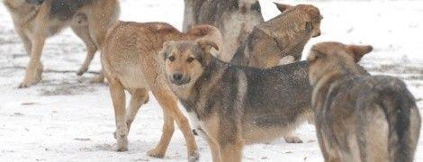 Чтобы не замерзли: в Кременчуге бродячих собак одели в свитера