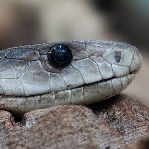 В Україні через спекотну погоду активізувалися змії, вже є потерпілі від їхніх укусів