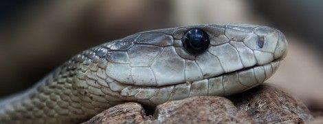В Украине из-за жаркой погоды активизировались змеи, уже есть пострадавшие от их укусов
