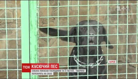 В Харькове домашний пес сильно покусал свою хозяйку и ее гостей