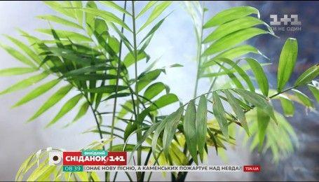 Топ-6 комнатных растений, которые очищают воздух - садоводство для чайников