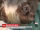 У Греції врятували покинуте матір'ю маля тюленя