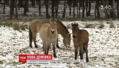 Четыре кобылы Пржевальского поселились в бывшей резиденции Януковича