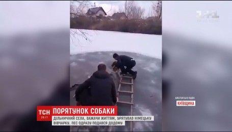 На Київщині сільський дільничний врятував собаку, яка ледь не втонула в ополонці