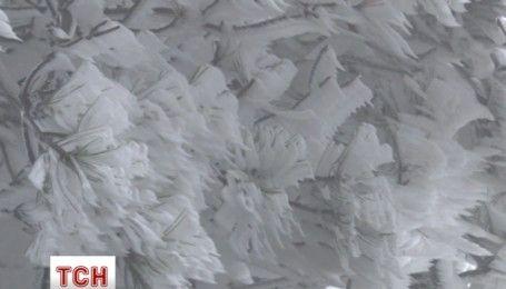 Глазуровані дерева: у Китаї через негоду всі рослини вкрилися льодяною скоринкою