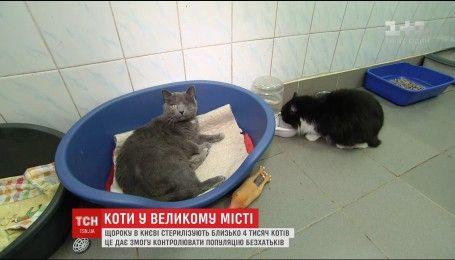 Зооволонтери столиці намагаються врятувати життя котів-безхатченків