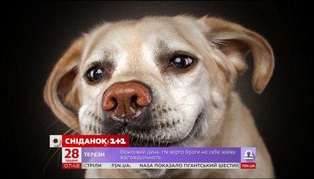 У США оприлюднили найпопулярніші прізвиська для собак