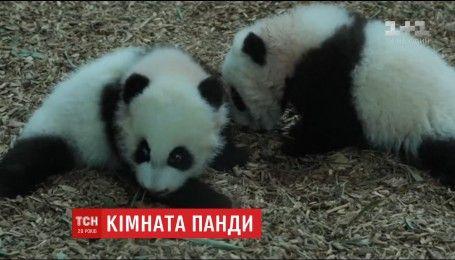 Зоопарк США обладнав галявину для мами-панди Лун-Лун і її дітей-двійнят