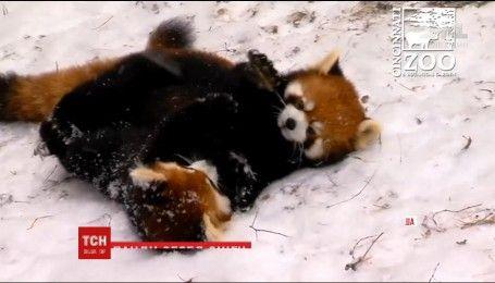Сніг та холод з іграми зустріли годованці зоопарку у Цинциннаті у США