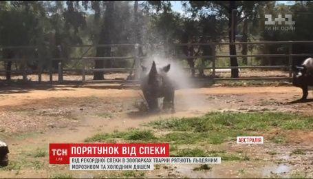 В австралійських зоопарках рятують тварин від рекордної спеки