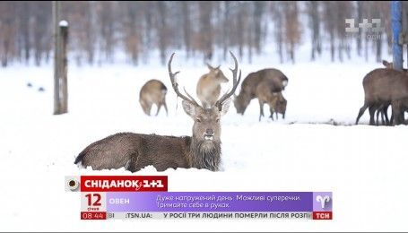 Мой Путеводитель. Ужгород - оленья ферма и уха по-венгерски