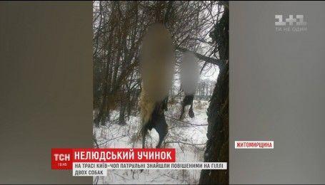 На Житомирщине полицейские нашли повешенными двух собак