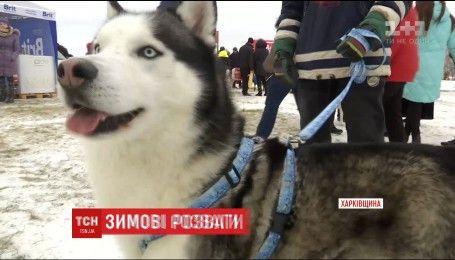 В Харькове состоялись экстремальные соревнования в скорости собак северных пород