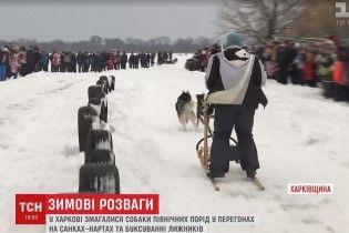 У Харкові відбулися незвичні змагання їздових собак