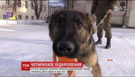 Харьковским военным волонтеры подарили пятерых щенков овчарки