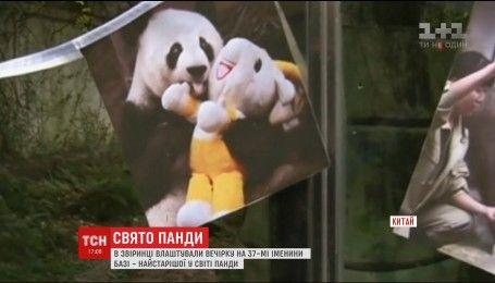Вечеринка для панды: как старейший китайский медведь отпраздновал 37-й день рождения