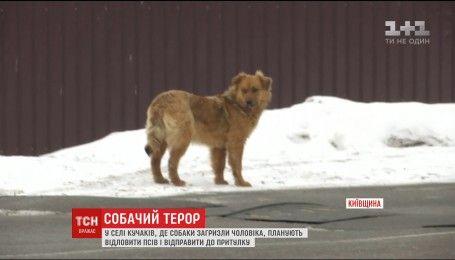 Собаки продолжают терроризировать село на Киевщине