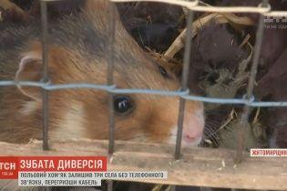 Польовий хом'як залишив без телефонного зв'язку три села на Житомирщині