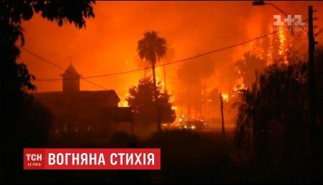 В Чили выгорело почти 50 тысяч гектаров лесов