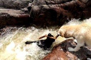 Героическое спасение. В Аргентине смелый собака вытащил из стремительной реки своего друга