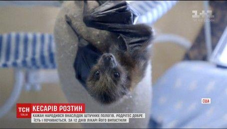 В калифорнийском зоопарке выжила летучая мышь, родившейся во время кесарева сечения