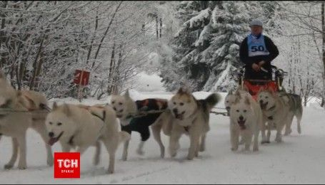 В Чехії стартував чемпіонат перегонів на собаках