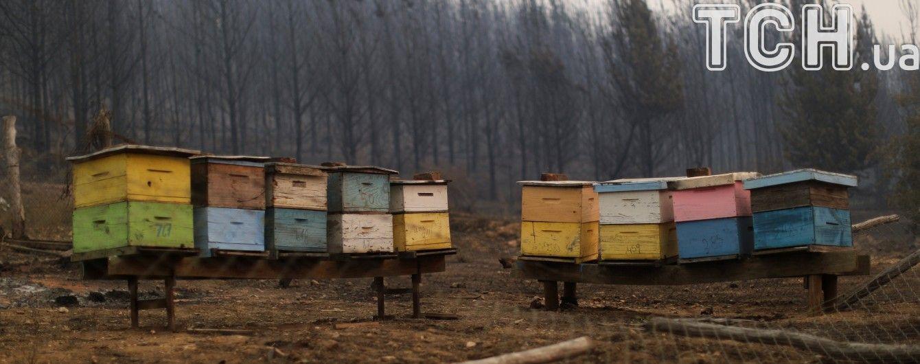 Химическая атака на Житомирщине: пчелы крестьян вымерли за сутки