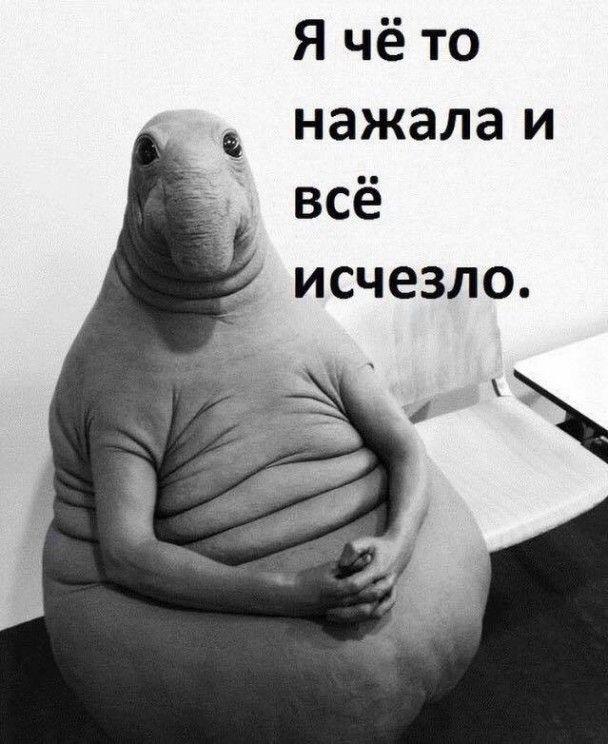 Почекун скасування санкцій. У Мережі казяться через новий мем з гібридом слона і тюленя